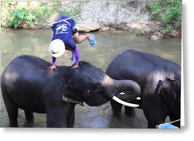 Elephant Baths - Maesa Elephant Camp - Chiang Mai Thailand - 011331 Greeting Card