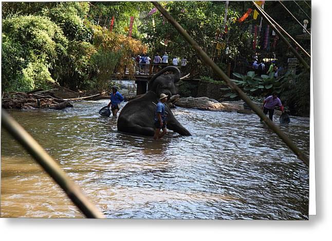 Elephant Baths - Maesa Elephant Camp - Chiang Mai Thailand - 01139 Greeting Card by DC Photographer