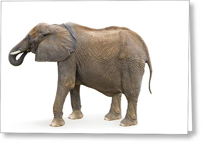 Greeting Card featuring the photograph Elephant by Charles Beeler
