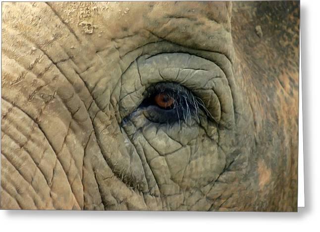 Elephant Eye Greeting Card by Lanjee Chee