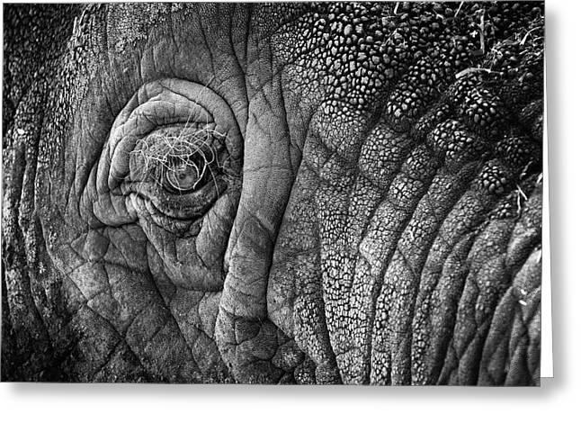 Elephant Eye Greeting Card by Sebastian Musial
