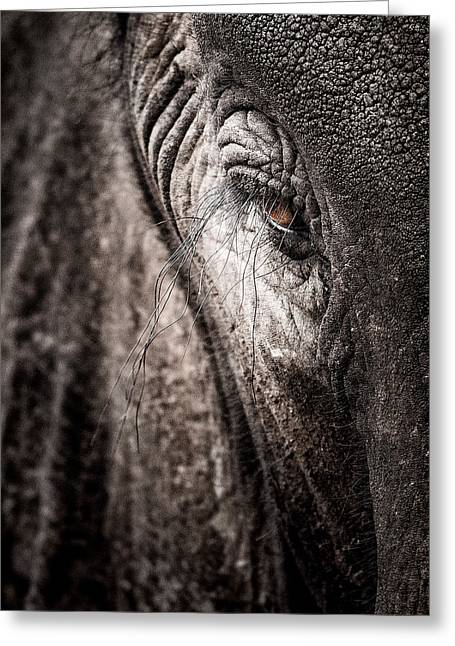 Elephant Eye Verical Greeting Card