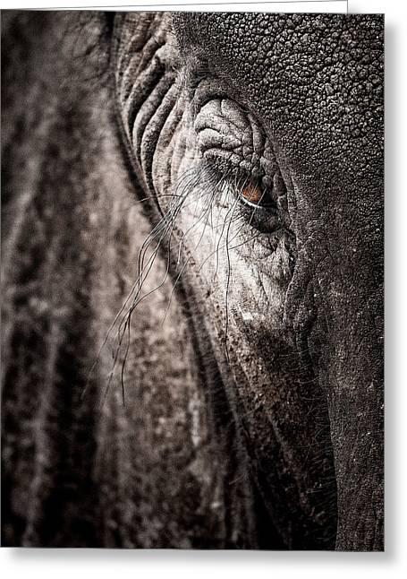 Elephant Eye Verical Greeting Card by Mike Gaudaur