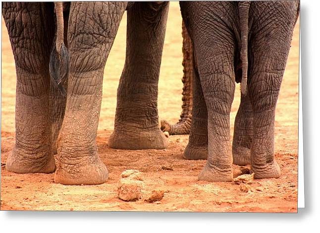 Greeting Card featuring the photograph Elephant Family by Amanda Stadther