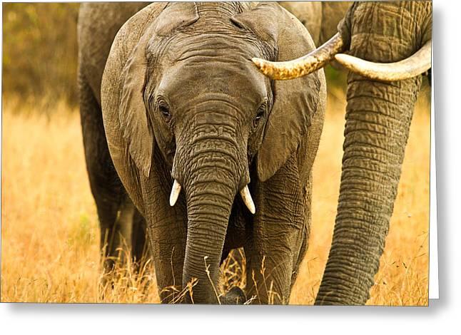 Elephant Family Greeting Card by Kongsak Sumano