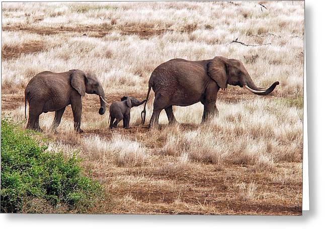 Elephant Family, Tanzania Greeting Card by Izonevision/robert D Abramson