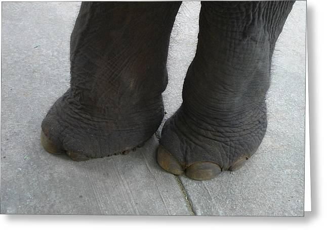 Elephant Feet Greeting Card