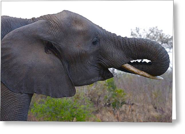 Elephant Having A Drink Greeting Card