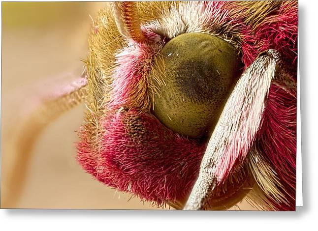 Elephant Hawk Moth Extreme Macro Greeting Card by Mr Bennett Kent