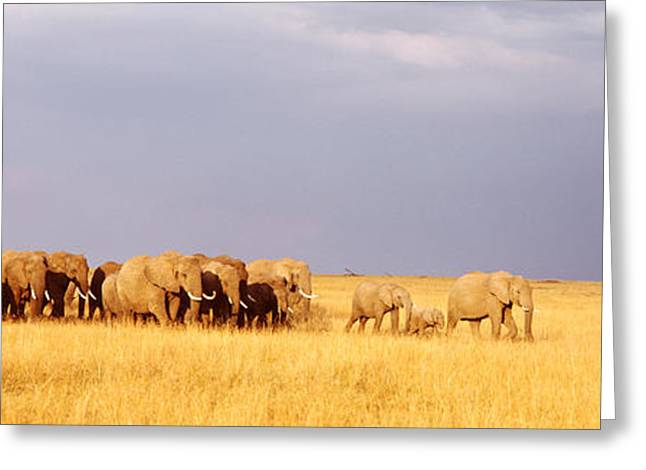 Elephant Herd, Maasai Mara Kenya Greeting Card by Panoramic Images