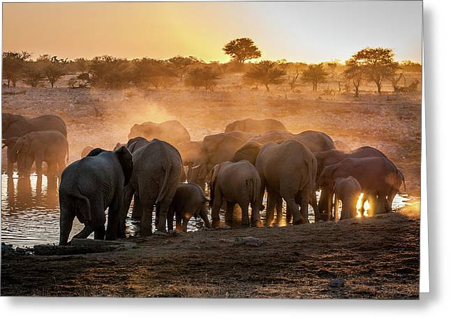 Elephant Huddle Greeting Card