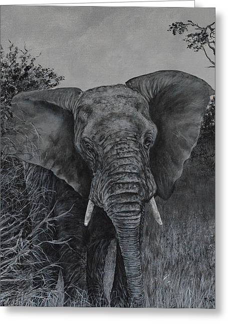 Elephant In African Preserve Greeting Card