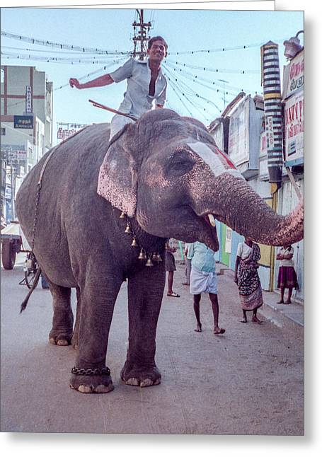 Elephant In The Street In India Greeting Card