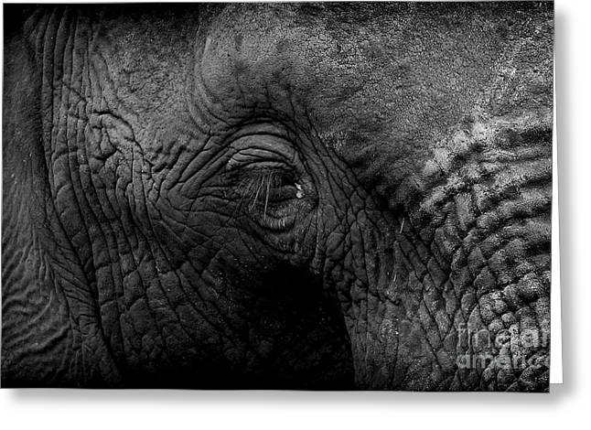 Greeting Card featuring the photograph Elephant by Michael Edwards
