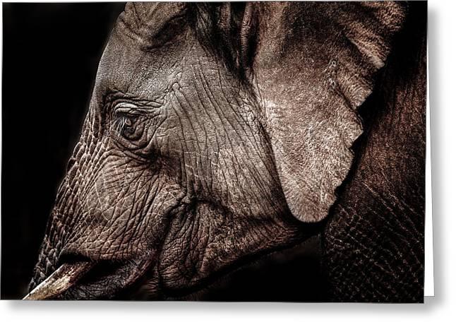 Elephant Profile Greeting Card