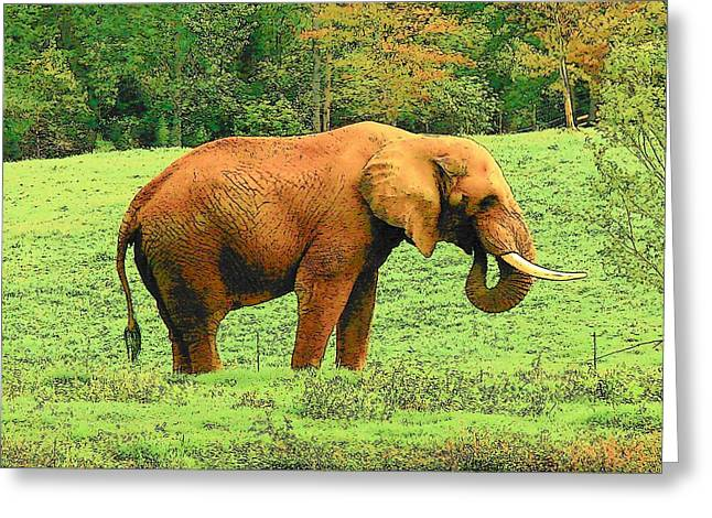 Greeting Card featuring the photograph Elephant by Rodney Lee Williams