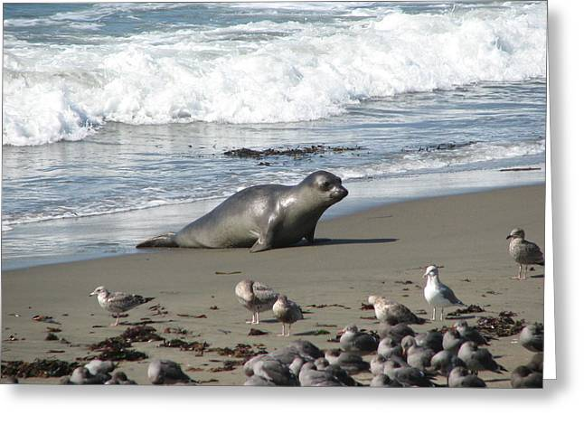 Greeting Card featuring the photograph Elephant Seal On Piedras Blancas Beach by Jan Cipolla