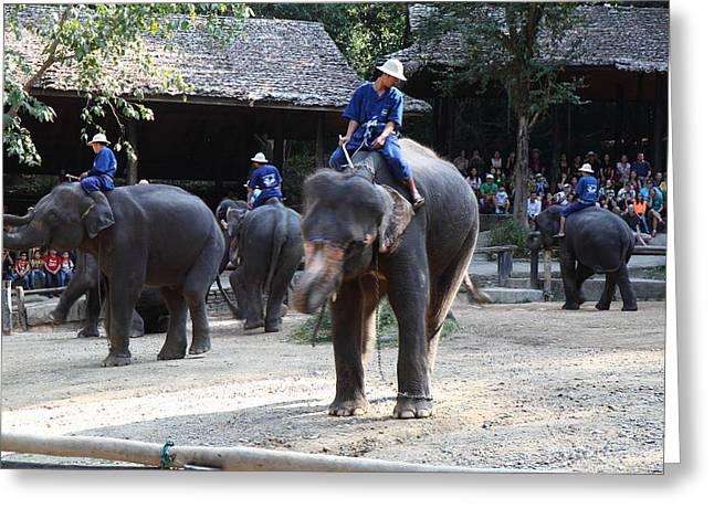 Elephant Show - Maesa Elephant Camp - Chiang Mai Thailand - 011318 Greeting Card