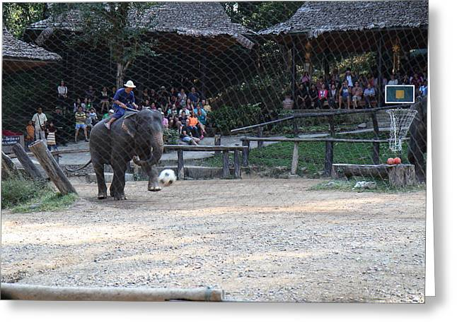 Elephant Show - Maesa Elephant Camp - Chiang Mai Thailand - 011330 Greeting Card by DC Photographer