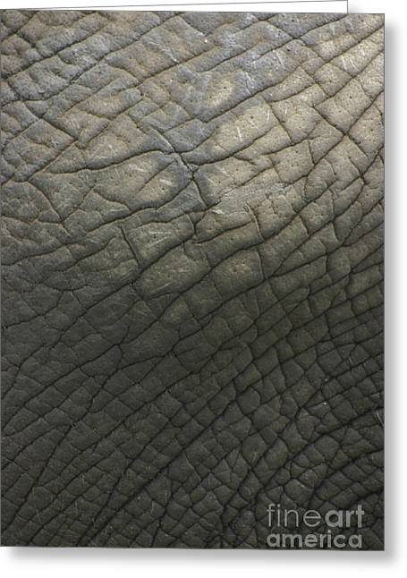 Elephant Skin Greeting Card
