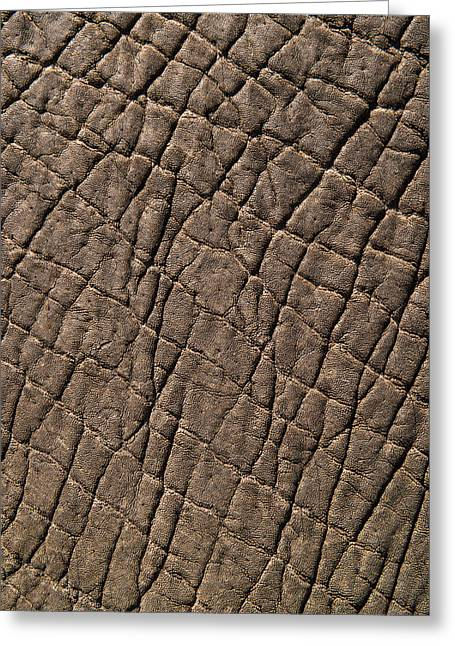 Elephant Skin, Zimbabwe Greeting Card by Pete Oxford