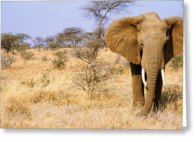 Elephant, Somburu, Kenya, Africa Greeting Card by Panoramic Images