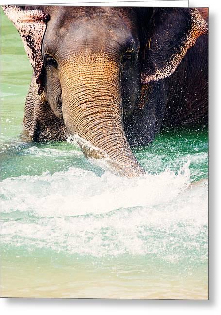 Elephant Splash Greeting Card by Pati Photography