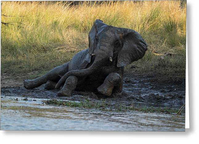 Elephant Taking Mud Bath, Zambezi Greeting Card