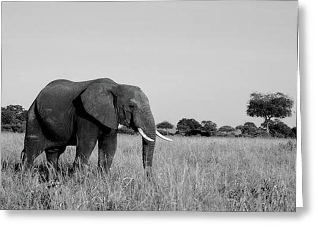 Elephant Tarangire Tanzania Africa Greeting Card