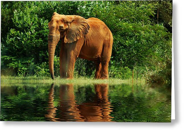 Elephant The Giant Greeting Card by B Wayne Mullins