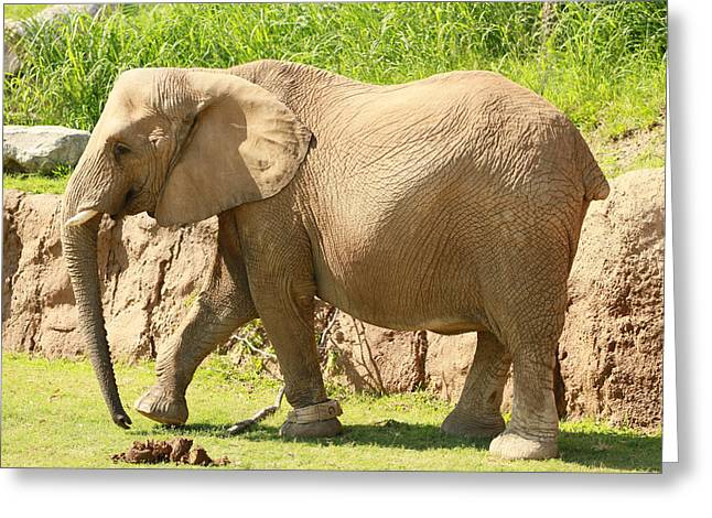 Elephant Greeting Card by Tinjoe Mbugus