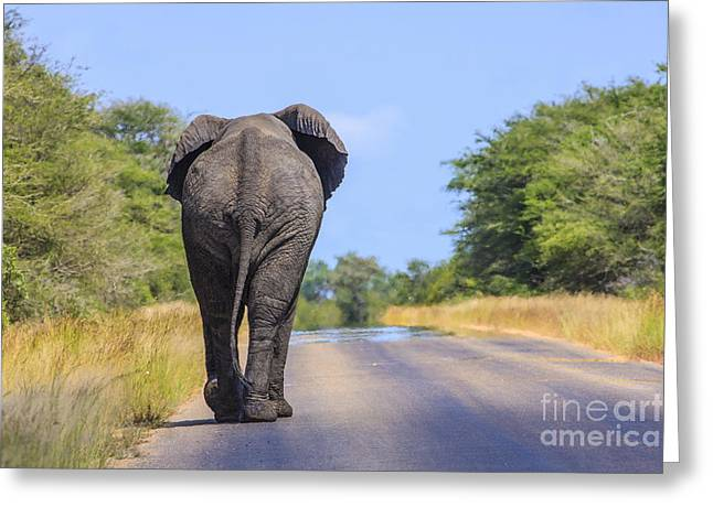 Elephant Walking Greeting Card