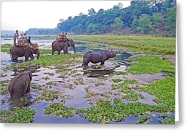 Greeting Card featuring the photograph Elephants And Black Rhinoceros In The Rapti River In Chitwan Np-nepal by Ruth Hager