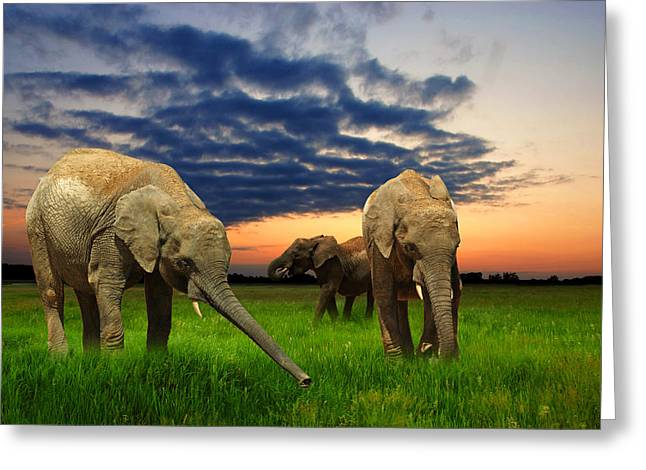 Elephants At Sunset Greeting Card by Jaroslaw Grudzinski