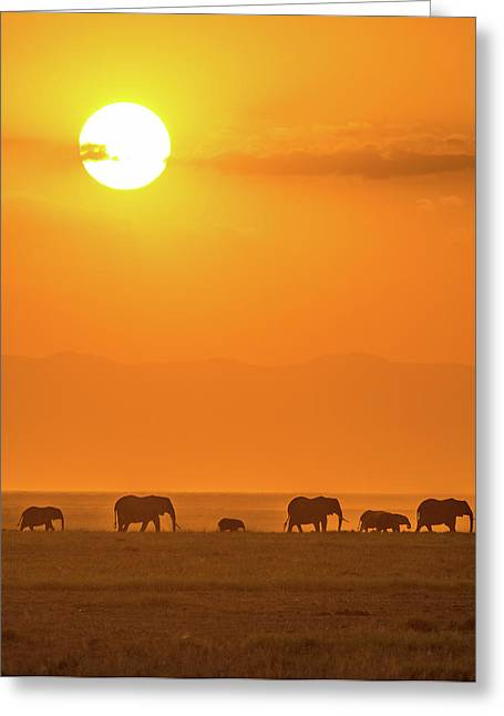 Elephants At Sunset Greeting Card