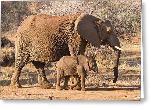 Elephants Big And Small Greeting Card by Phil Stone