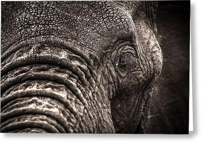 Elephant's Eye Greeting Card