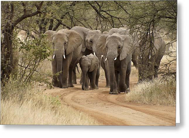 Elephants Have The Right Of Way Greeting Card