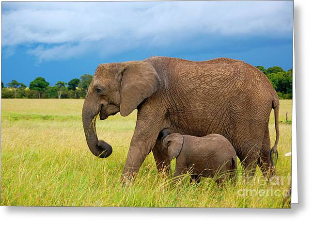 Elephants In Masai Mara Greeting Card
