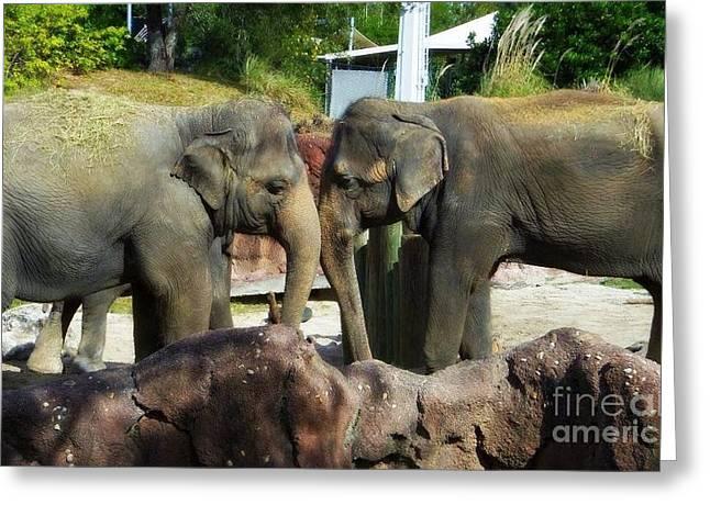 Elephants Snuggle Greeting Card