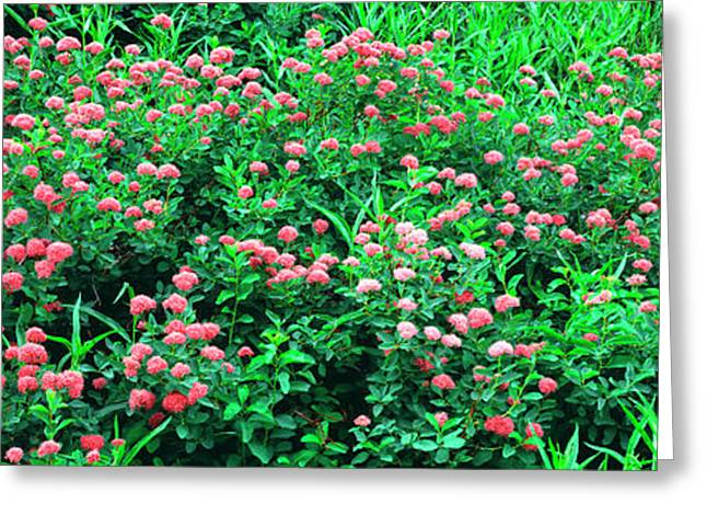 Elevated View Of Alpine Flowers Greeting Card