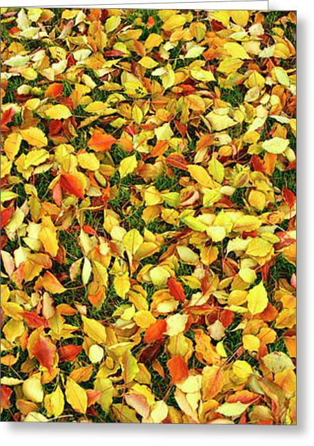 Elevated View Of Fallen Leaves, Pacific Greeting Card