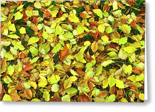 Elevated View Of Fallen Leaves, San Greeting Card