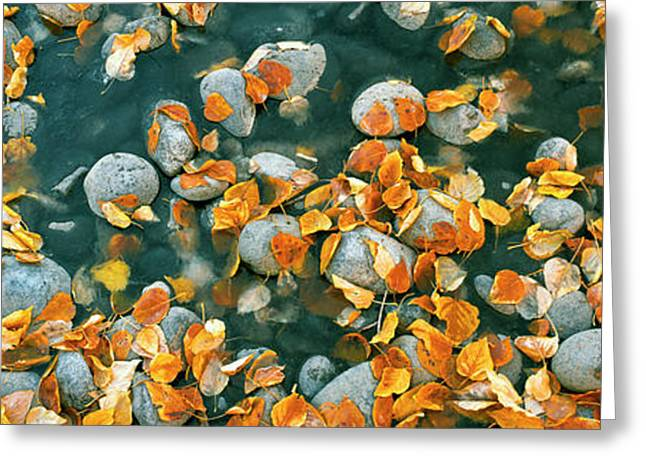 Elevated View Of Leaves In A Creek Greeting Card by Panoramic Images