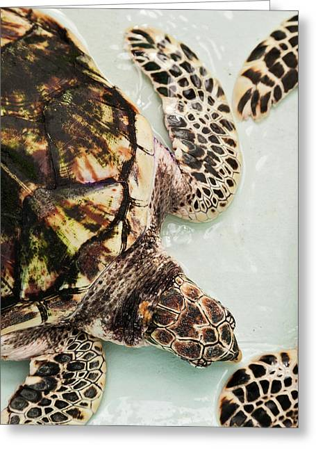 Elevated View Of Sea Turtle, Old Hegg Greeting Card