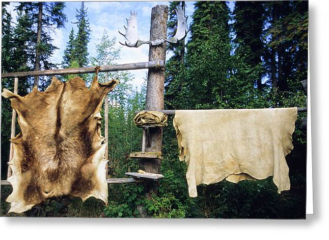 Elk And Moose Hides Stretched And Hang Greeting Card by Angel Wynn