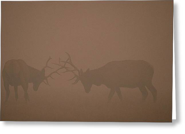 Elk Bulls Fighting In Smoke From Fire Greeting Card by Michael Quinton