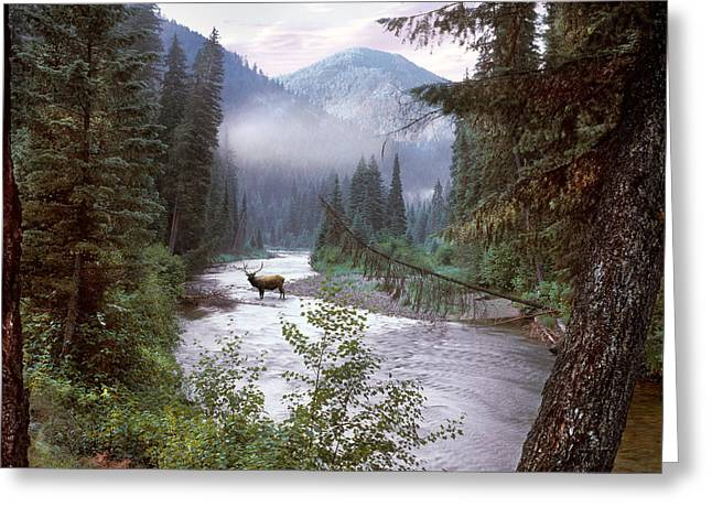 Elk Crossing 2 Greeting Card