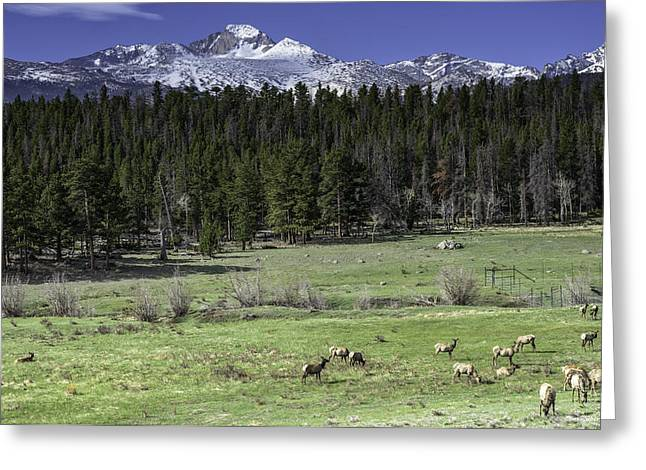 Elk In Meadow Greeting Card by Tom Wilbert