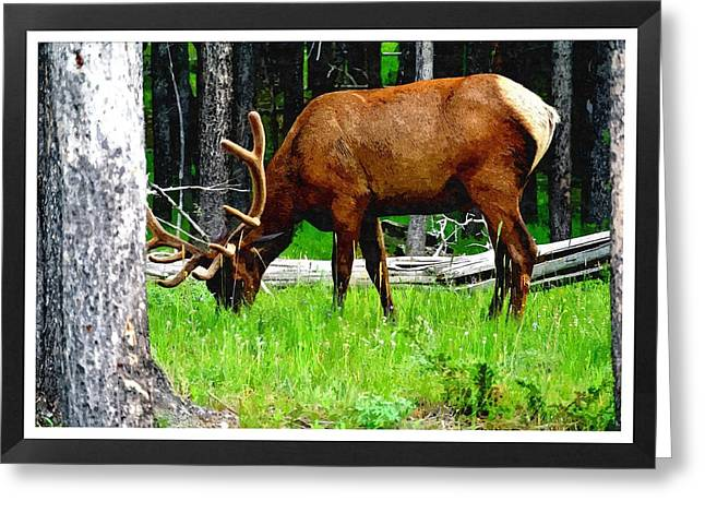 Elk In Montana Greeting Card by Larry Stolle